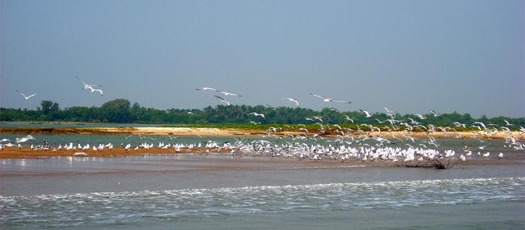 The bird's Island Nalabana