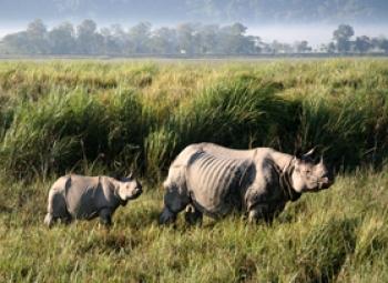 Wildlife Tour With Kaziranga